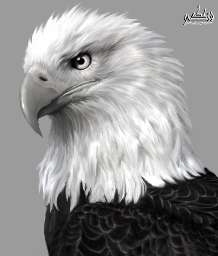 پرواز دنباله عقاب
